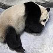 Panda Paws Art Print