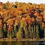 Panorama Of Trees Along The Waters Edge Art Print