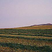 Panoramic View Of An Alfalfa Field Art Print