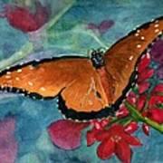 Papilio Fandango  Art Print