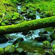 Paradise Of Mossy Logs And Slow Water   Art Print