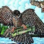 Paragon Falcon Art Print