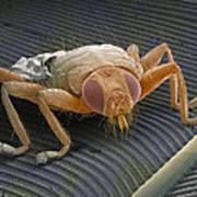 Parasitic Fly, Sem Art Print