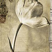 Paris Papers Art Print
