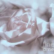 Parlour Rose Art Print