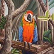 Parrot At New Orleans Zoo Art Print