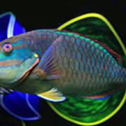 Parrot Fish With Glass Art Art Print