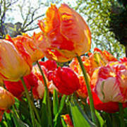 Parrot Tulips In Philadelphia Art Print by Mother Nature