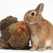 Partridge Pekin Bantam With Rabbit Art Print