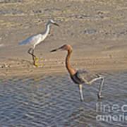 Passing Egrets Art Print