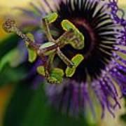 Passionate Flower Art Print by Kathy Yates