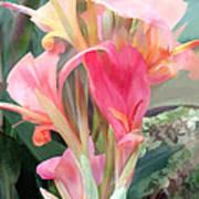 Pastel Pink Cannas Art Print
