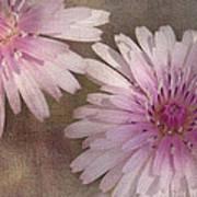 Pastel Pink Passion Art Print