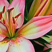 Pastel Pretty Art Print