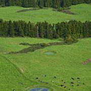 Pastures In Azores Islands Art Print