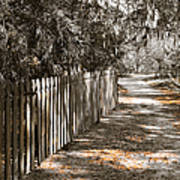 Path Along The Fence Art Print