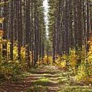 Path Into The Forest In Autumn Sault Art Print