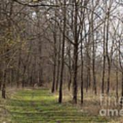 Path Of The Trees Art Print
