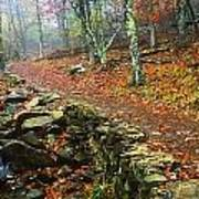Path Through Forest, Shenandoah Art Print