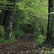Path Through The Woods Inistioge Art Print