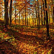 Paths Home Art Print
