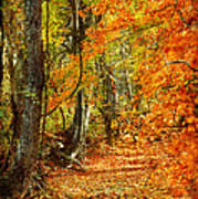 Pathway Through Autumn Woods Art Print by Cheryl Davis