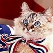 Patriotic Puddy Cat Art Print
