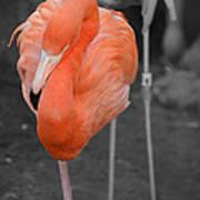 Peaceful Flamingo Art Print