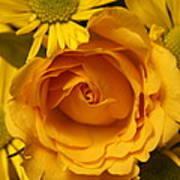 Peach Rose-yellow Daisies Art Print