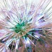 Peacock Dandelion - Macro Photography Art Print