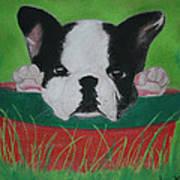 Peekaboo Art Print by M Valeriano