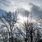 Peeking Sun Through The Branches Art Print