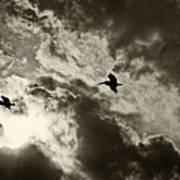 Pelican Fly By Art Print