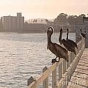 Pelican Gang Art Print