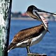 Pelican II Art Print