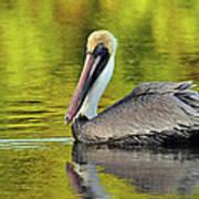 Pelican On A Golden Pond Art Print