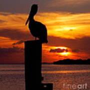 Pelican Sundown Print by Karen Wiles