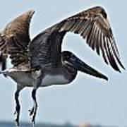 Pelican V Art Print