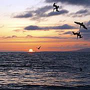 Pelicans Diving At Sunset Art Print