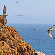 Pelicans Off The Point Art Print