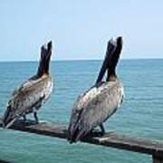Pelicans On The Pier Art Print