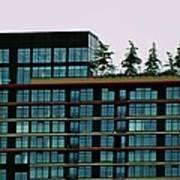 Penthouse Pines Art Print