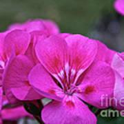 Pepto Pink Art Print