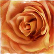Perfection In Peach Art Print