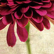 Petales De Fleurs Art Print