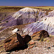 Petrified Logs In The Badlands Art Print