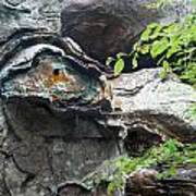 Petrified Prehistoric Monster In Arkansas Art Print by Douglas Barnett