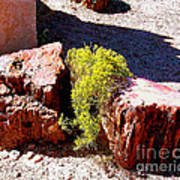 Petrified Tree Stumps In Arizona Art Print