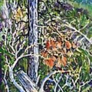 Petroglyph Pines Art Print