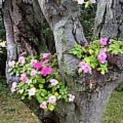 Petunia Tree Art Print